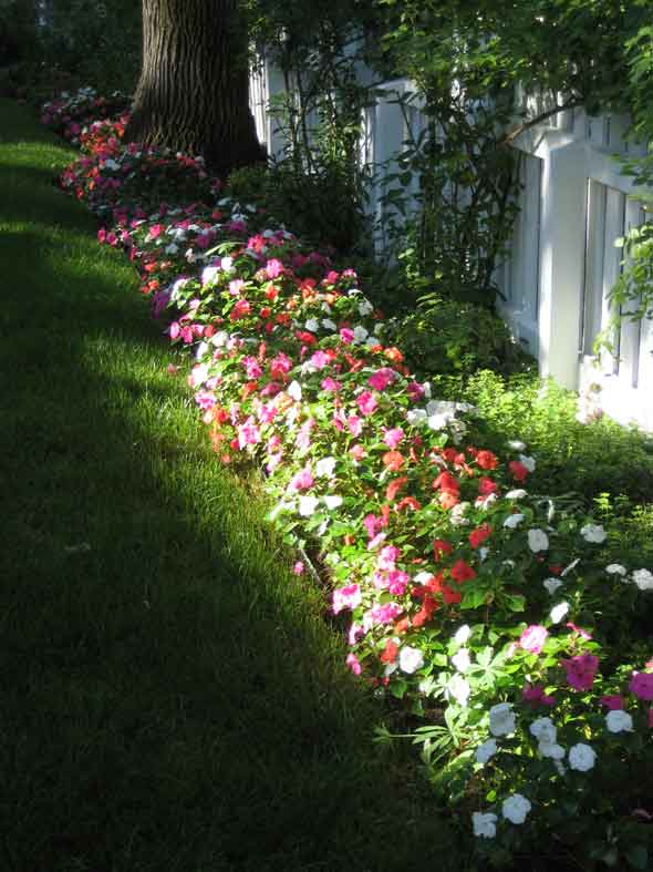 annuals by stonegate gardens of denver, colorado, Natural flower