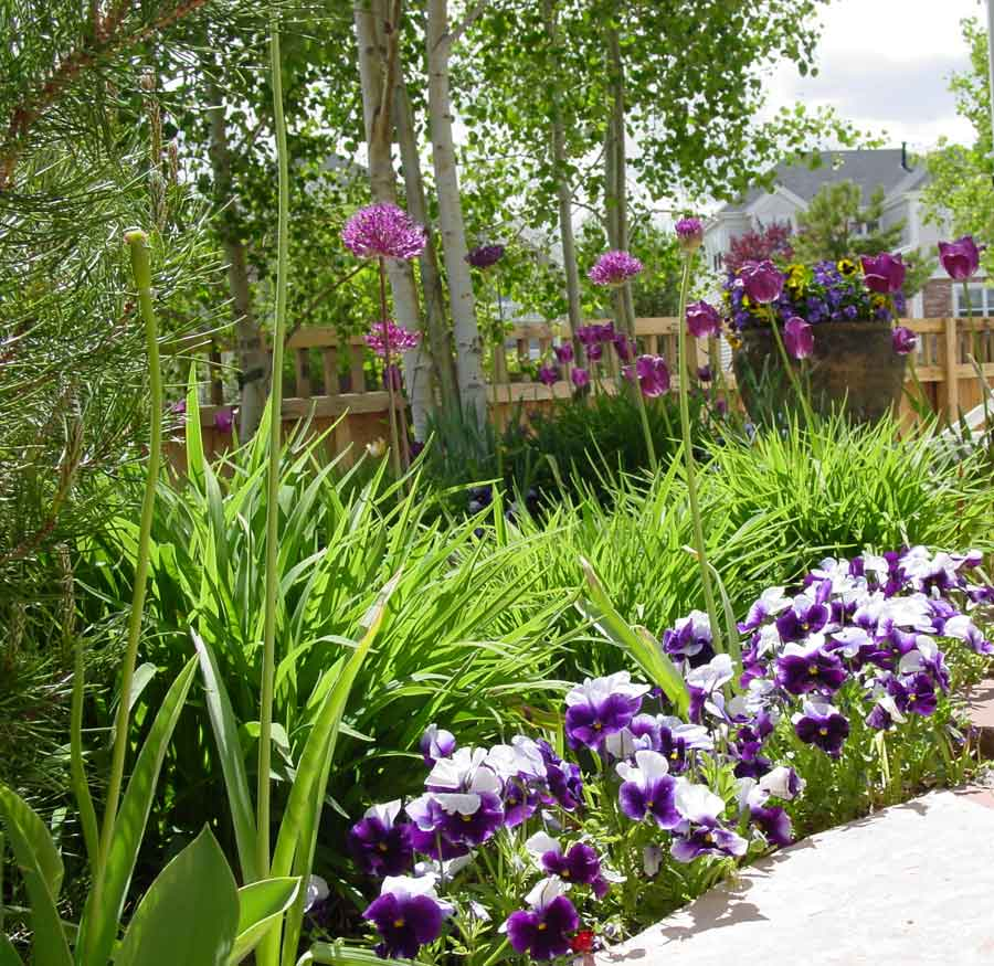 Bulbs and Pansies by Stonegate Gardens of Denver Colorado
